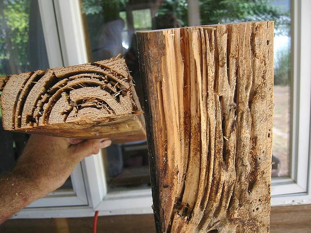 Comment lutter contre les termites ?